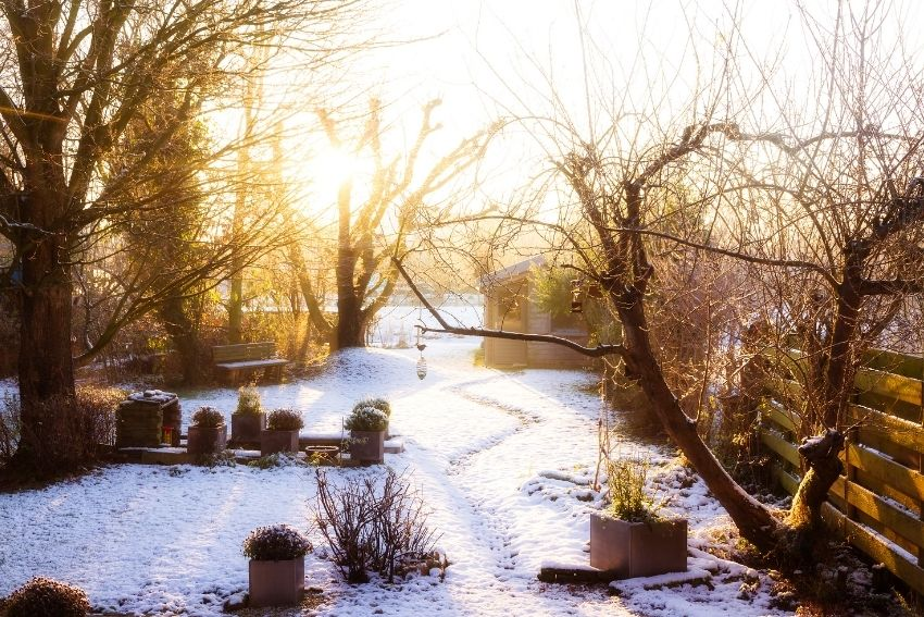 tips voor je tuin in de winter
