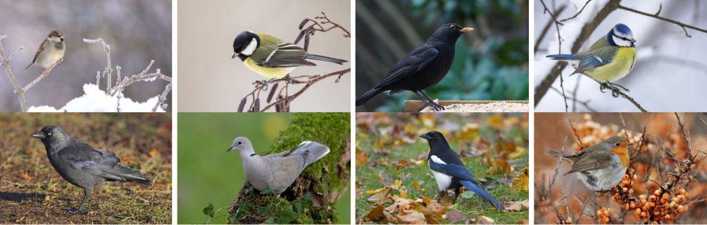 [:nl]De Nationale Tuinvogeltelling 2017 | Doe jij ook mee?[:]