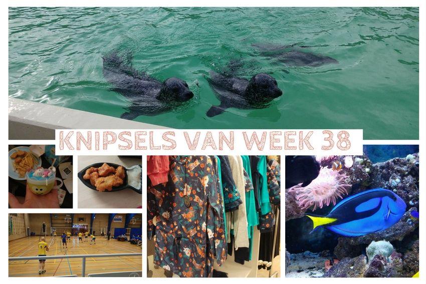 [:nl]Knipsels van week 38: Dory gevonden, Neeltje Jans en oma jarig[:en]Knipsels van week 38[:]