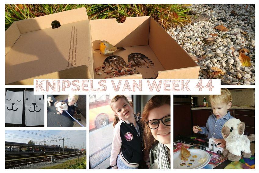 [:nl]Knipsels van week 44: als je zus van huis is en vechtende roodborstjes[:]