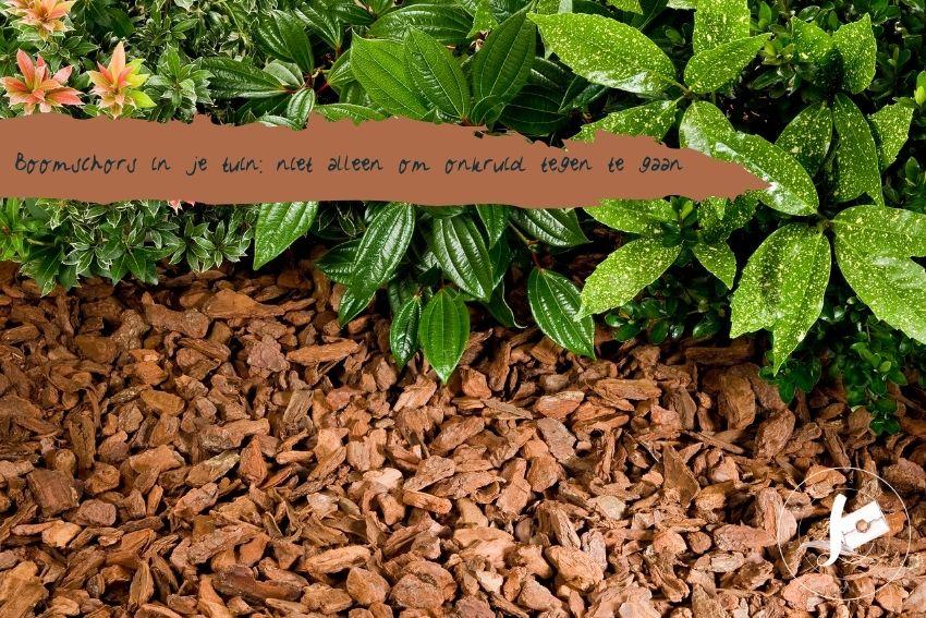 Boomschors in je tuin: niet alleen om onkruid tegen te gaan